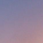 Viola-rosa